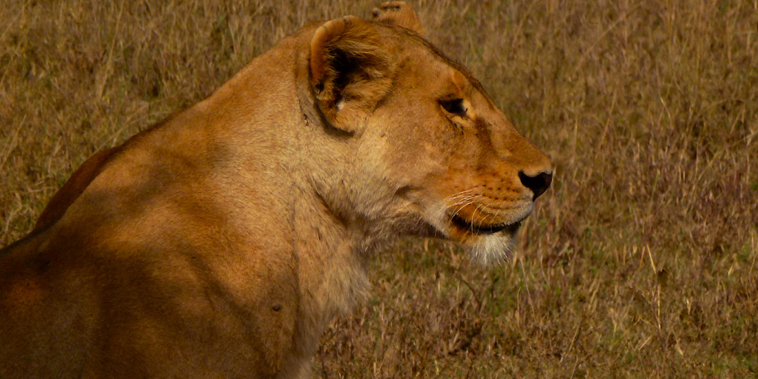 Serengeti-Migration-8-day-Safari-3
